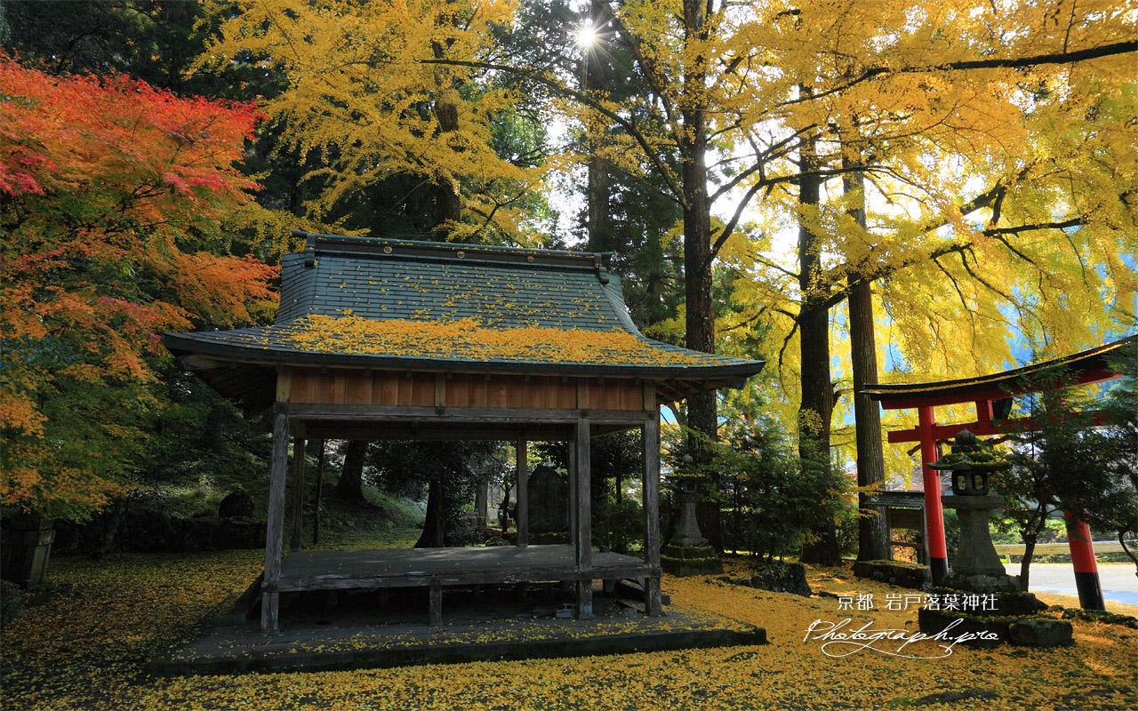 岩戸落葉神社の落葉 壁紙