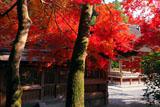 出雲大神宮 紅葉越しの拝殿