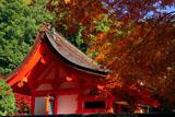 出雲大神宮 紅葉と本殿