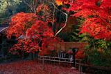 鍬山神社 紅葉と安産石