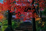 紅葉越しの亀岡神蔵寺山門