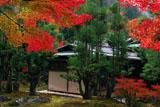 しょうざん 紅葉と北山台杉