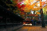 上御霊神社 御霊杜の紅葉