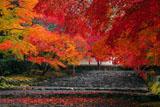 二尊院参道の散紅葉
