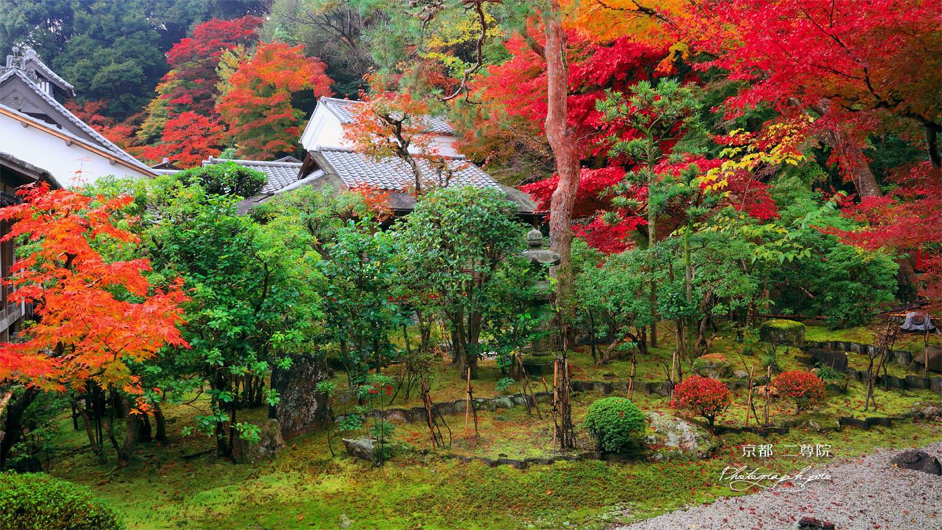 二尊院寂光園の紅葉 壁紙