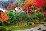 二尊院寂光園の紅葉