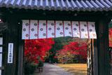勧修寺 中門越しの紅葉
