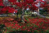 勧修寺 平庭の散り紅葉