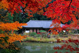 浄瑠璃寺 紅葉越しの本堂