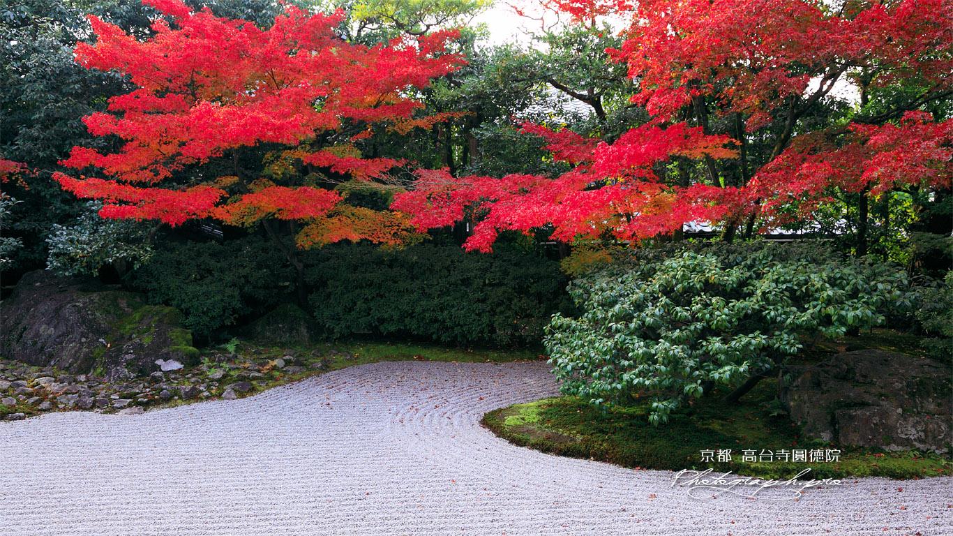 京都圓徳院 南庭の紅葉 壁紙