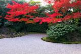 京都圓徳院 南庭の紅葉