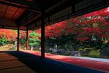 京都圓徳院 北庭の紅葉