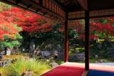 京都圓徳院 北庭の芒と紅葉