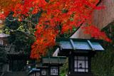京都長楽寺 紅葉と山門