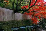京都長楽寺 参道の竹垣と紅葉