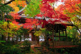 長楽寺 紅葉の本堂と鐘楼