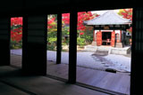 建仁寺 方丈から紅葉の納骨堂