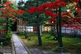 建仁寺西来院の紅葉