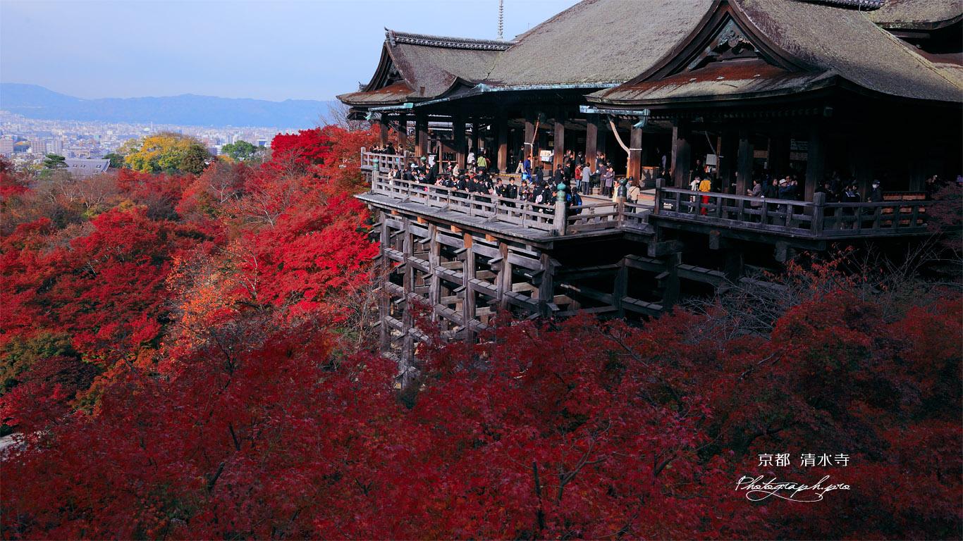 紅葉の清水の舞台 壁紙
