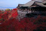 紅葉の清水の舞台
