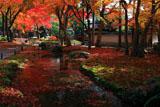 しょうざん 小川と散り紅葉