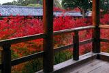 東福寺方丈からの通天紅葉