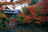 南禅寺天授庵 書院南庭西池の紅葉
