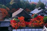 南禅寺三門から紅葉の天授庵