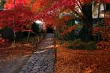 蓮華寺 紅葉の参道