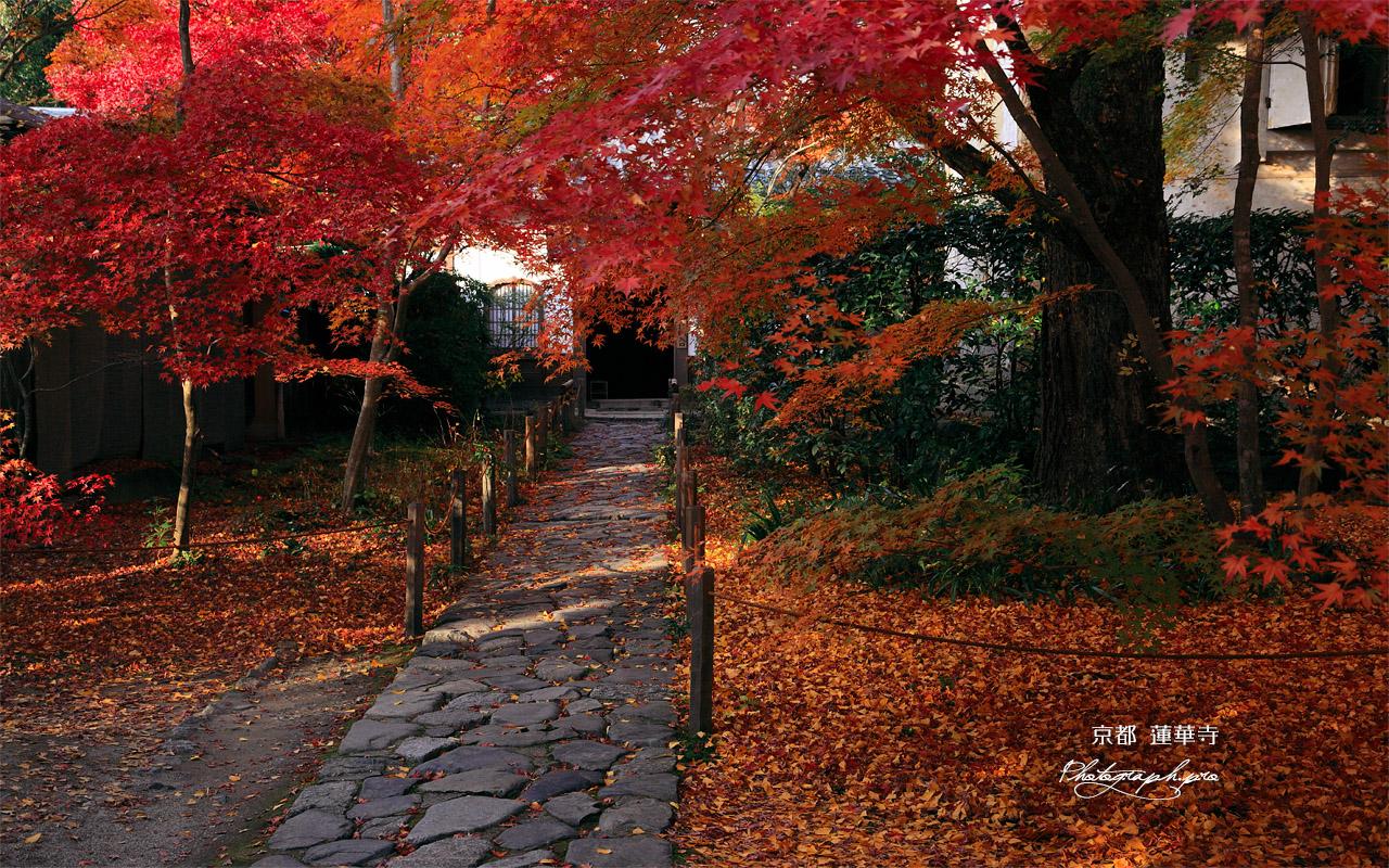 蓮華寺 紅葉の参道 壁紙