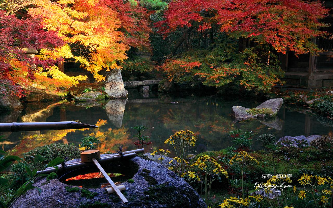蓮華寺 蹲踞と紅葉 壁紙