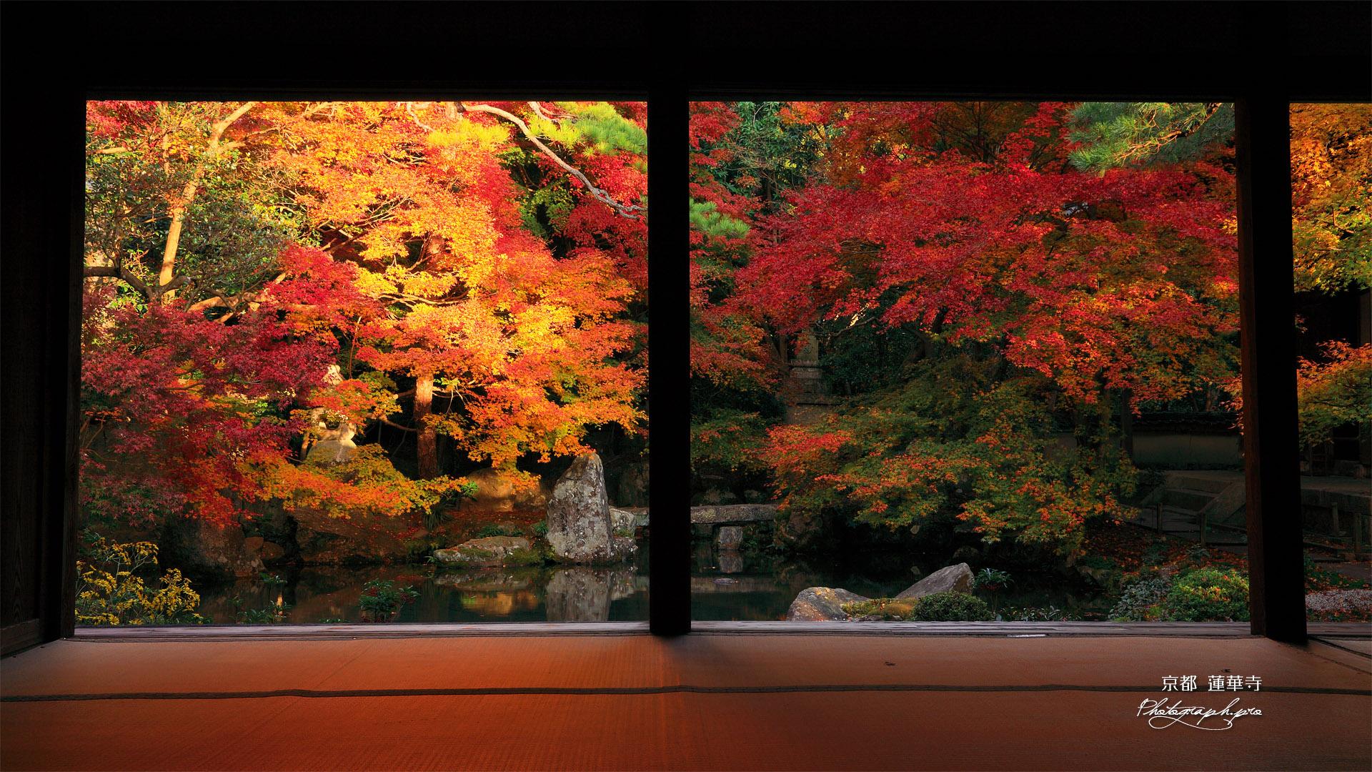 蓮華寺 紅葉の浄土式庭園