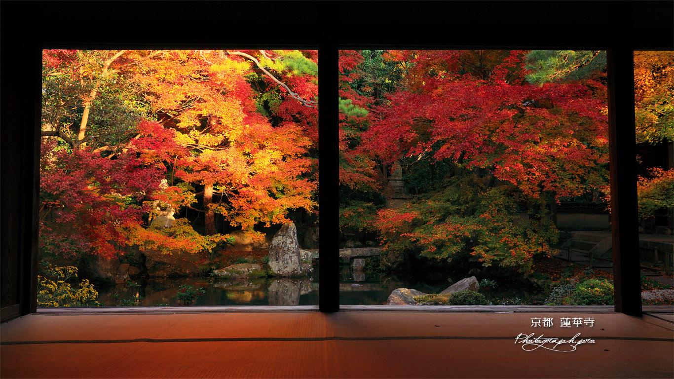 蓮華寺 紅葉の浄土式庭園 壁紙