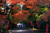 京都法輪寺 石段の紅葉