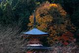 京都法輪寺 黄葉の多宝塔
