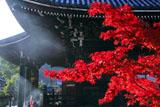 清凉寺 紅葉と光芒射す本堂