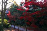 清凉寺 庫裡前の紅葉