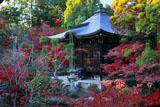 清凉寺 弁天堂の紅葉