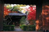 妙心寺霊雲院 表門越しの紅葉と大玄関