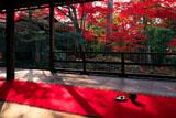 妙心寺大法院での且座喫茶