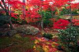 妙心寺大法院露地庭園の紅葉