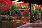 妙心寺大法院 紅葉の路地庭の腰掛待合