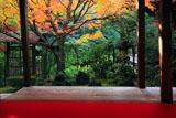妙心寺桂春院 書院から紅葉の侘の庭