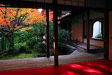 妙心寺桂春院 書院から外露地の紅葉