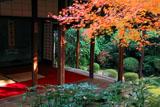 妙心寺桂春院 紅葉と書院