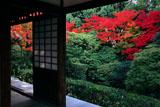 妙心寺桂春院 方丈から思惟の庭の紅葉