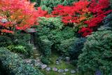妙心寺桂春院 紅葉の思惟の庭