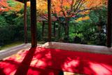 妙心寺桂春院 書院の毛氈の陽斑