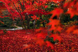 法金剛院庭園の紅葉