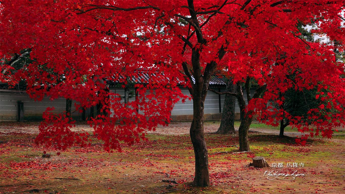 広隆寺講堂前の紅葉 壁紙